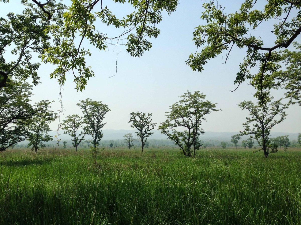 Bunte Tierwelt und glühende Hitze – Chitwan Nationalpark