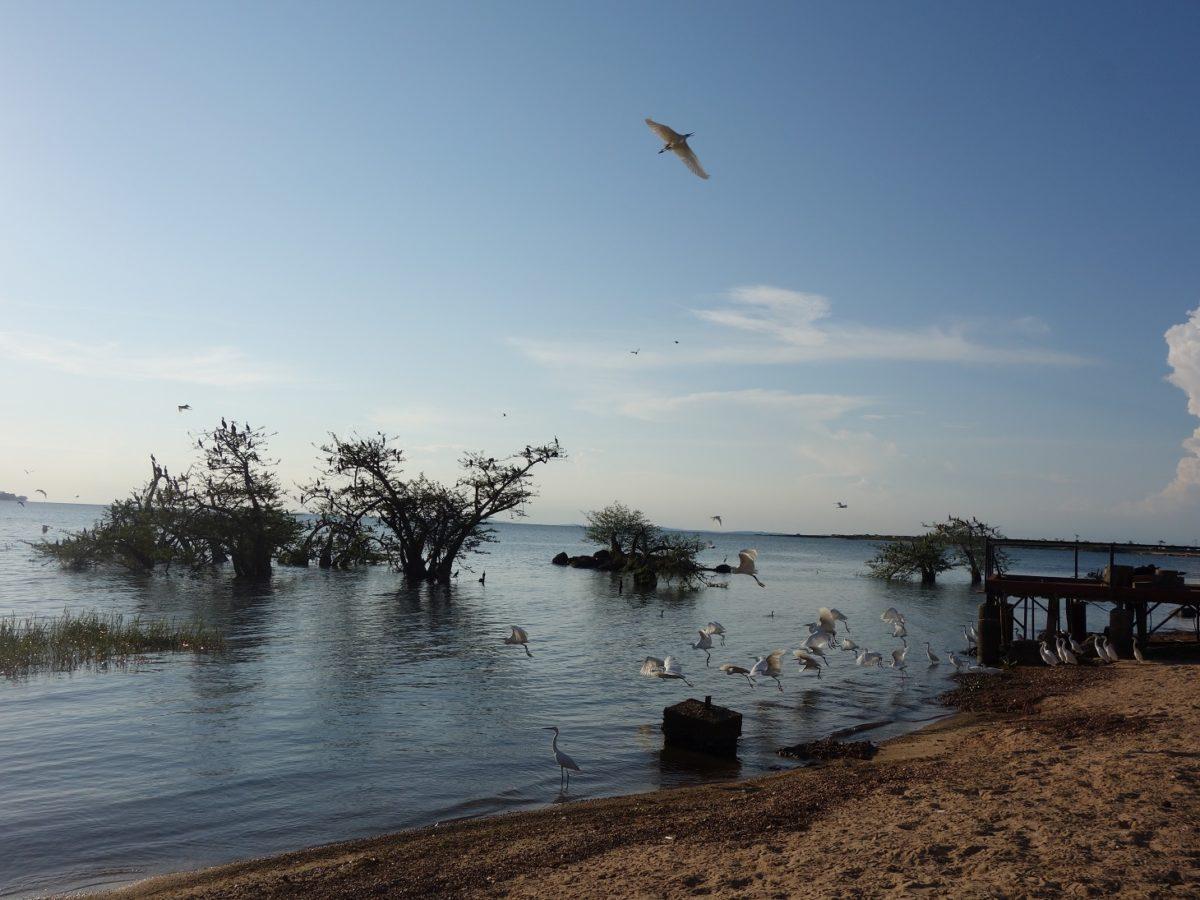 beachside birds paradise
