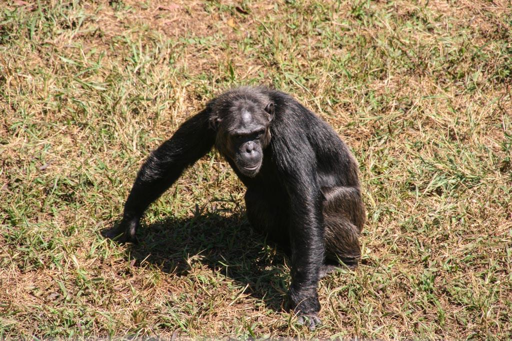 News von der Insel – Foto Update, Ngamba Island